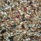 无观赏幼鸽粮赛飞鸽子玉米鸽肉信鸽中国5斤散装鸟粮食保健砂包邮